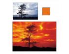 Квадратный фильтр Cokin P 002 Orange