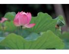 Светофильтр Marumi Silky Soft A 49mm